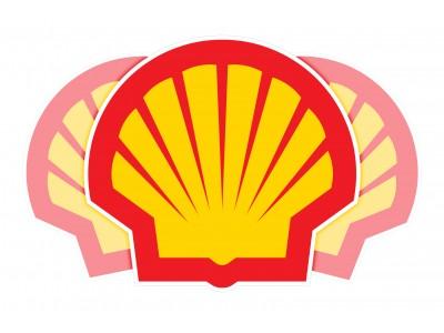 Shell vinyl stickers 3pcs